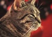 Musikalische Katze