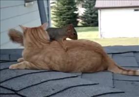 Katze vs. Eichhörnchen
