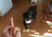 Hund mag den Stinkefinger nicht