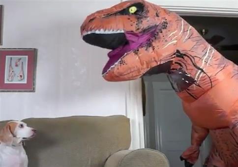 Der Alltag wenn dein Herrchen ist T-Rex ist