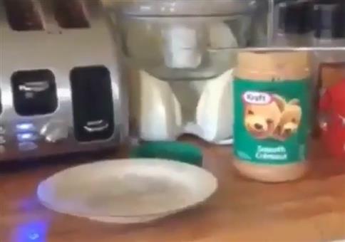 Vom Toaster auf den Teller