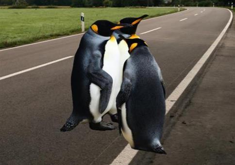 Verkehrserziehung für Pinguine