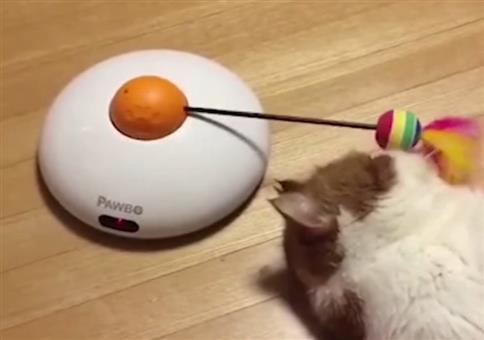 Depri Katze