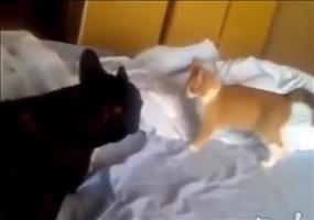 Angriff der Killerkatze