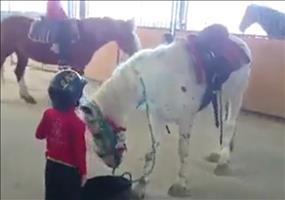 Alternative ein Pferd zu besteigen