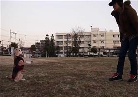 Hund fängt den Ball