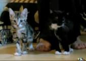 Mit Lasern auf Katzen schießen