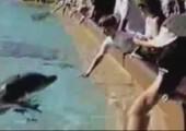 Fieser Delfin