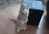Katze fängt ihr Futter