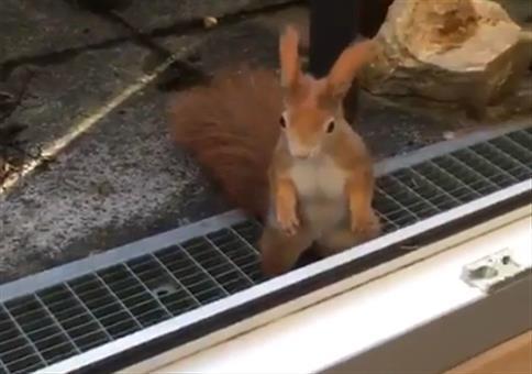 Eichhörnchen bekommt eine Nuss geschenkt