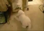 Puppy vs. himself