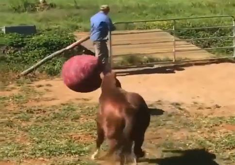 Gib dem Pferd einen Ball