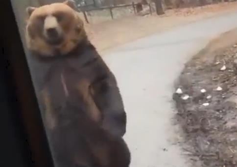 Als plötzlich der Bär vorbei läuft