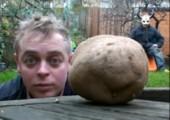 Look at my Potato