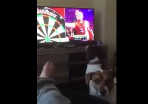 Hund verfolgt Darts im TV