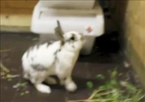 Parkour Bunny