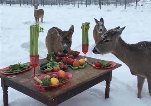 Festmahl im Wald