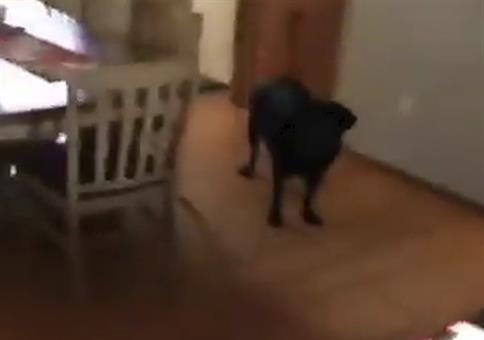 Käse zu Hund