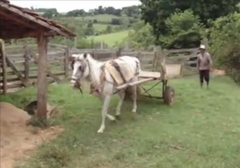 Pferd parkt alleine ein