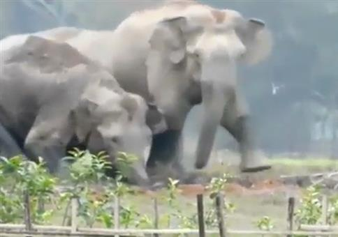 Da ist der kleine Elefant in den Graben gefallen
