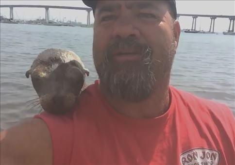 Mein neuer Freund die Robbe