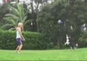 Volleyball spielender Hund