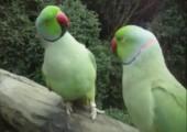 Wenn Vögel sich unterhalten