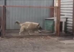 Hund mag Modern Talking