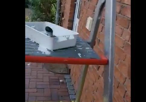 Der Dachunterstand müsste mal wieder gestrichen werden