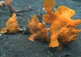 Die strangesten Unterwasserkreaturen