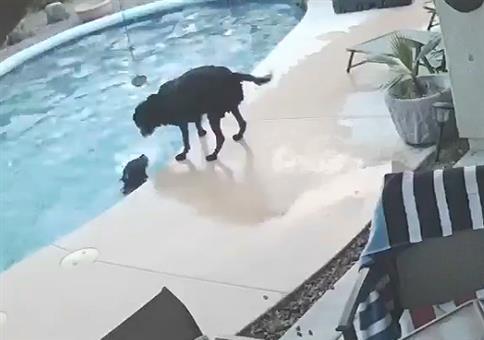 Hund rettet seinen Kumpel im Pool