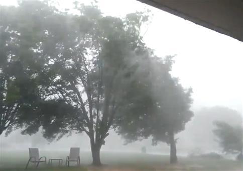 Kleines Stürmchen vs Bäume