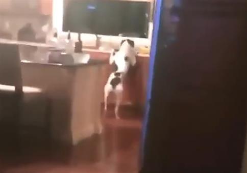 HEY! Den Hund beim Wassertrinken erschrecken