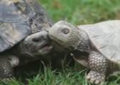 Schildkröte als Freund