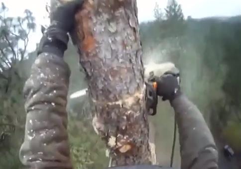 Baum Stück für Stück fällen