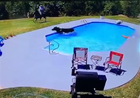 Cowboy und Kuh schmeißen ne Poolparty