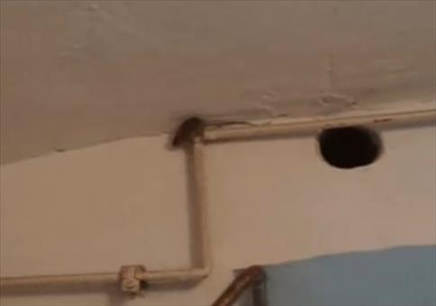 Maus flüchtet über Rohre