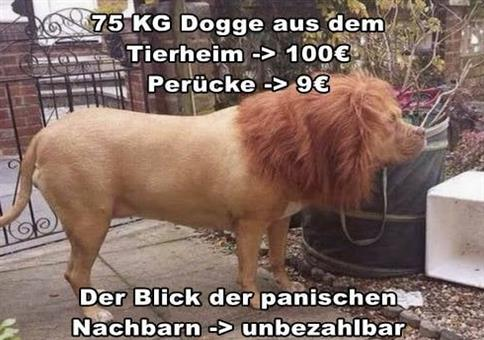 Wenn du einen Löwen auf Wish bestellst