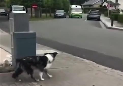 Hund freut sich auf den Eismann