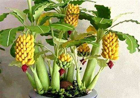 Bananenbaum mit Minibananen