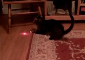 Die Laser Katze