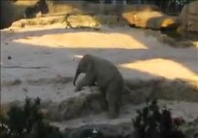 Mini Elefanten Ausrutscher im Zoo