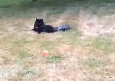 Katzen sind so grazile Wesen