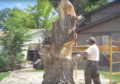 Baum mit Kettensäge bearbeiten