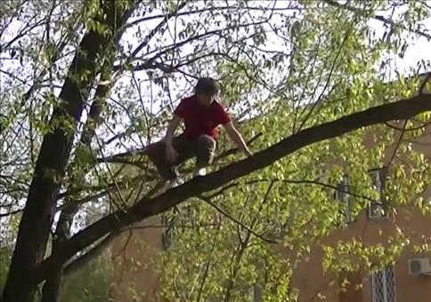 Leute vs. Bäume Fail Compilation