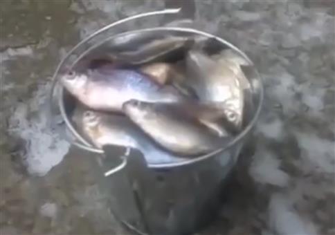 Fetter Fang von heute