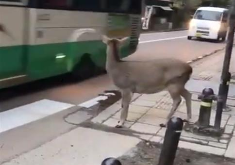 Neulich an einem Zebrastreifen in Japan