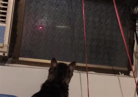 Laserpointer ist nicht nur was für Katzen