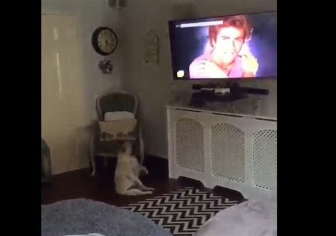 Hund tanzt merkwürdig