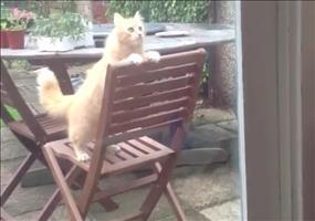 Diese Katze möchte unbedingt nach drinnen